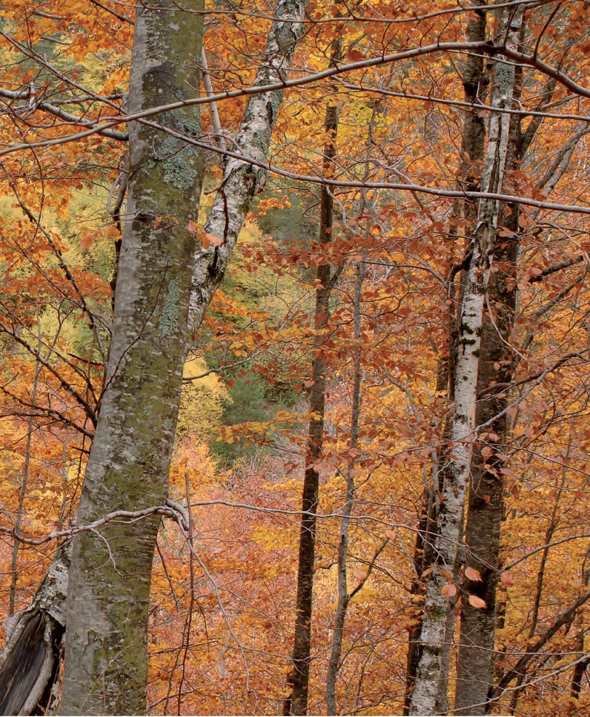 Φθινοπωρινό τοπίο στη Ροδόπη - Φωτ. Αρχείο ΕΚΒΥ/Λ. Λογοθέτης